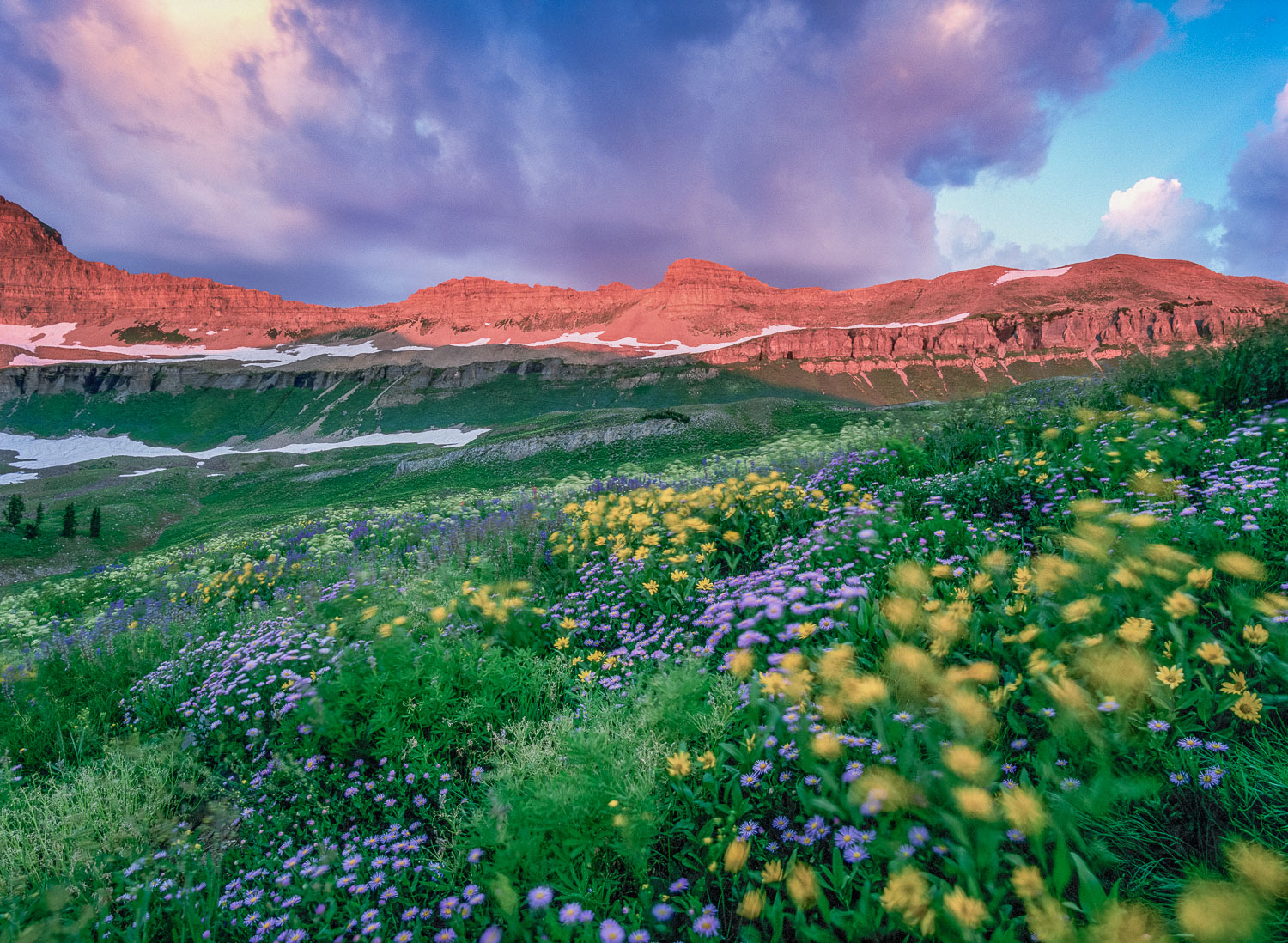 Wildflowers blowing in the Wind, Mt. Timpanogos, near Provo and