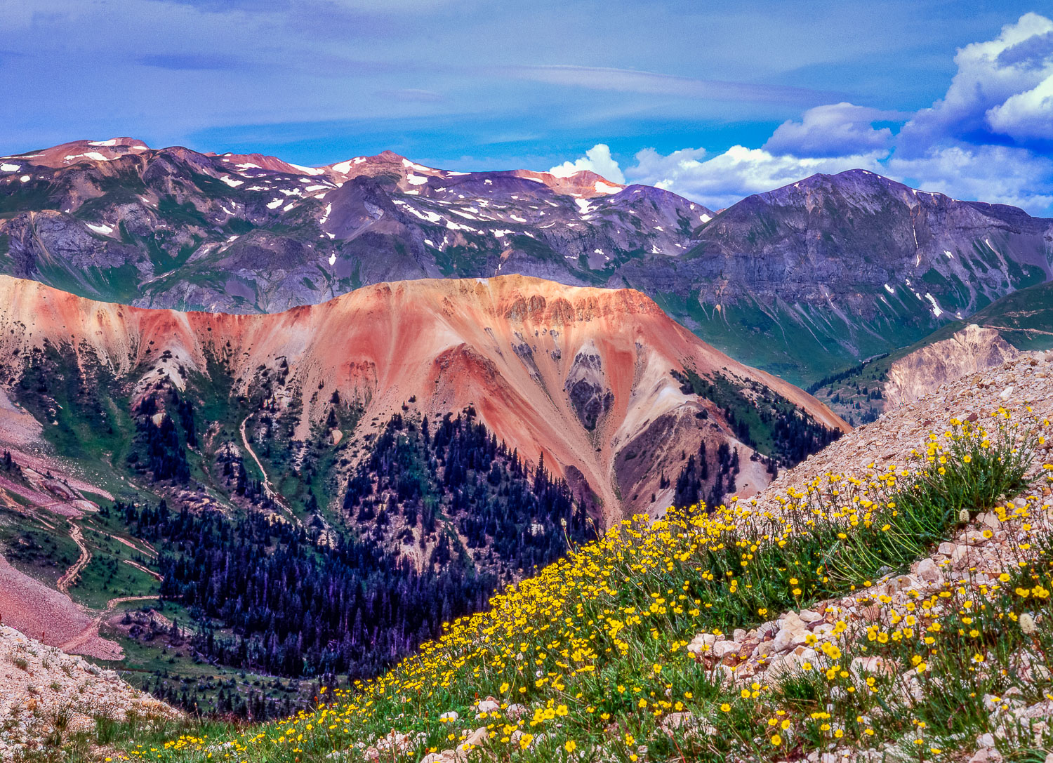 """Chromatic Vista Ouray"", Sub-alpine buttercups and mineral-laden"