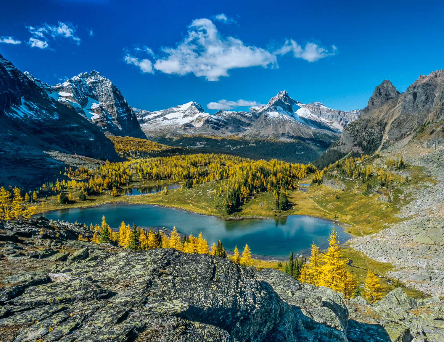 """Larch Majesty"", Yellow Larch Surround Lake Hungabee in Yoho Nat"