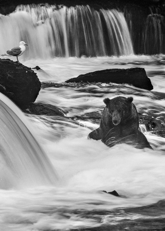 """Monochrome Plunge"" Black and White B&W photograph of Alaskan Br"