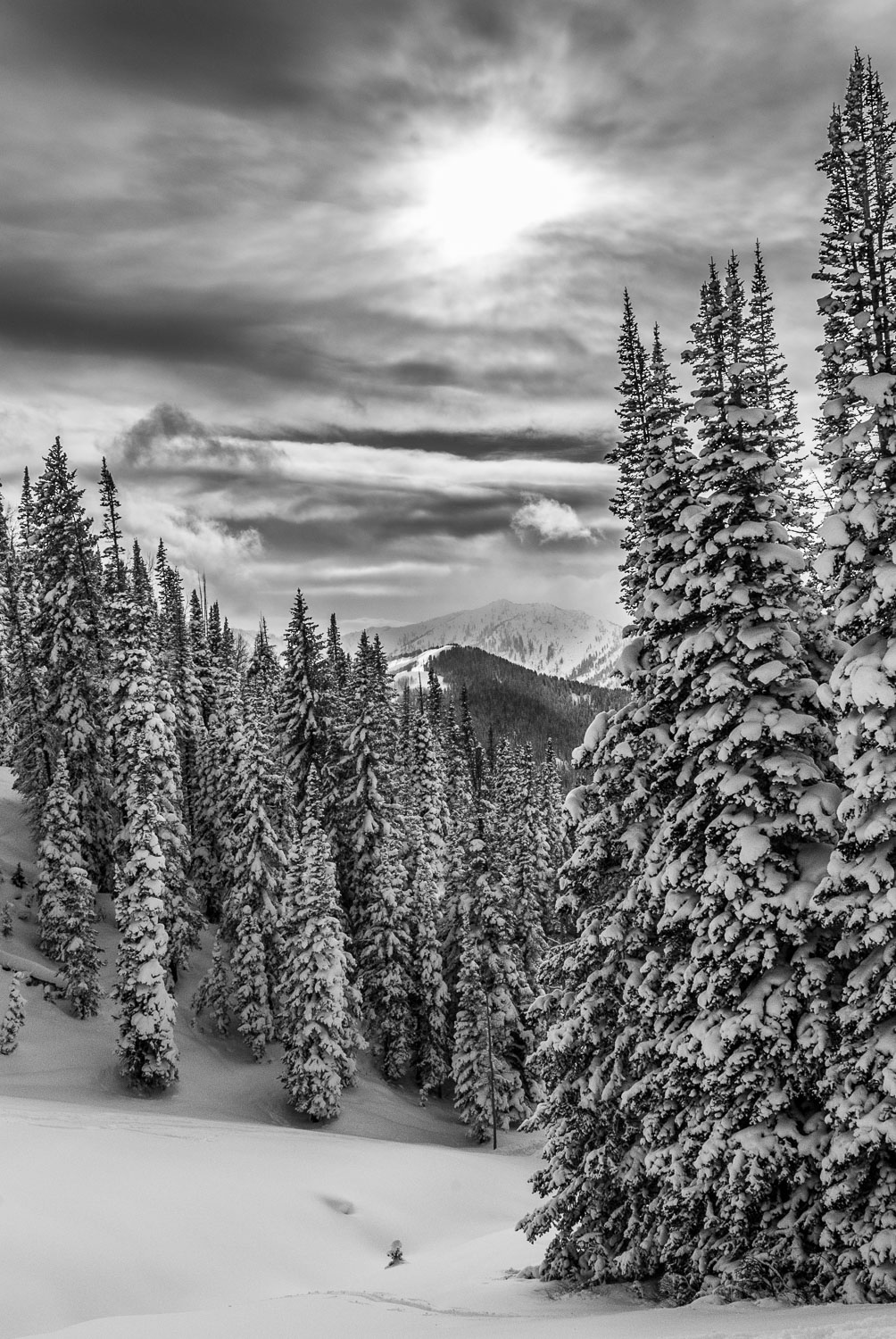 """Evergreen Powder Solstice"" Black and White Photograph, B&W of F"
