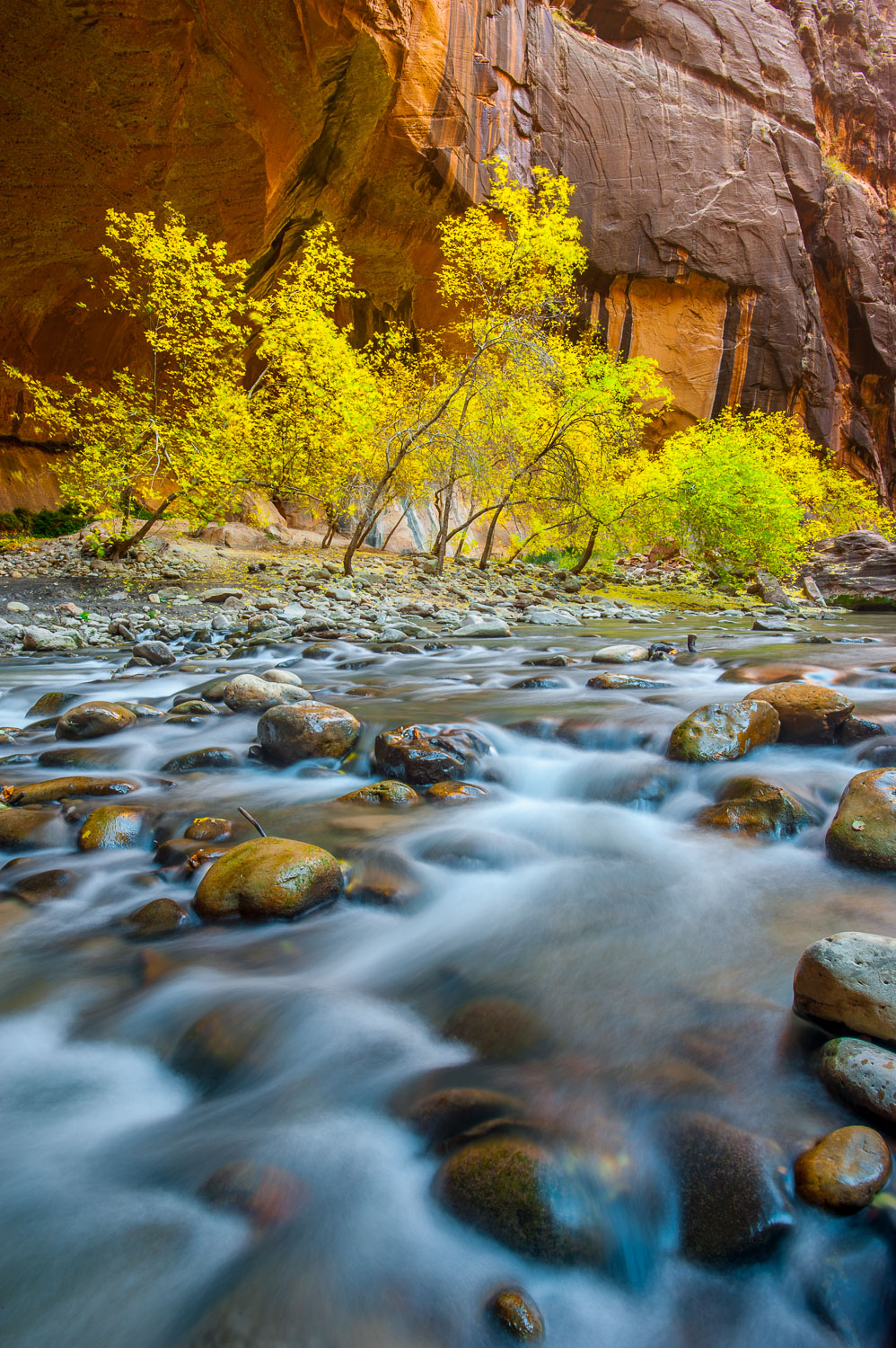 """Life of Zion"", Virgin River and Yellow Box Elder Tree, Autumn i"