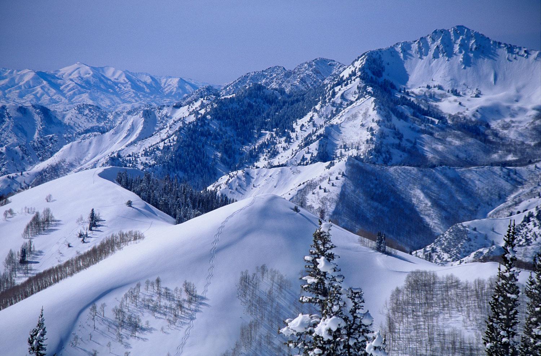 """Powder Perfection Duo"" Perfect  Ski Tracks into Beartrap. Big C"