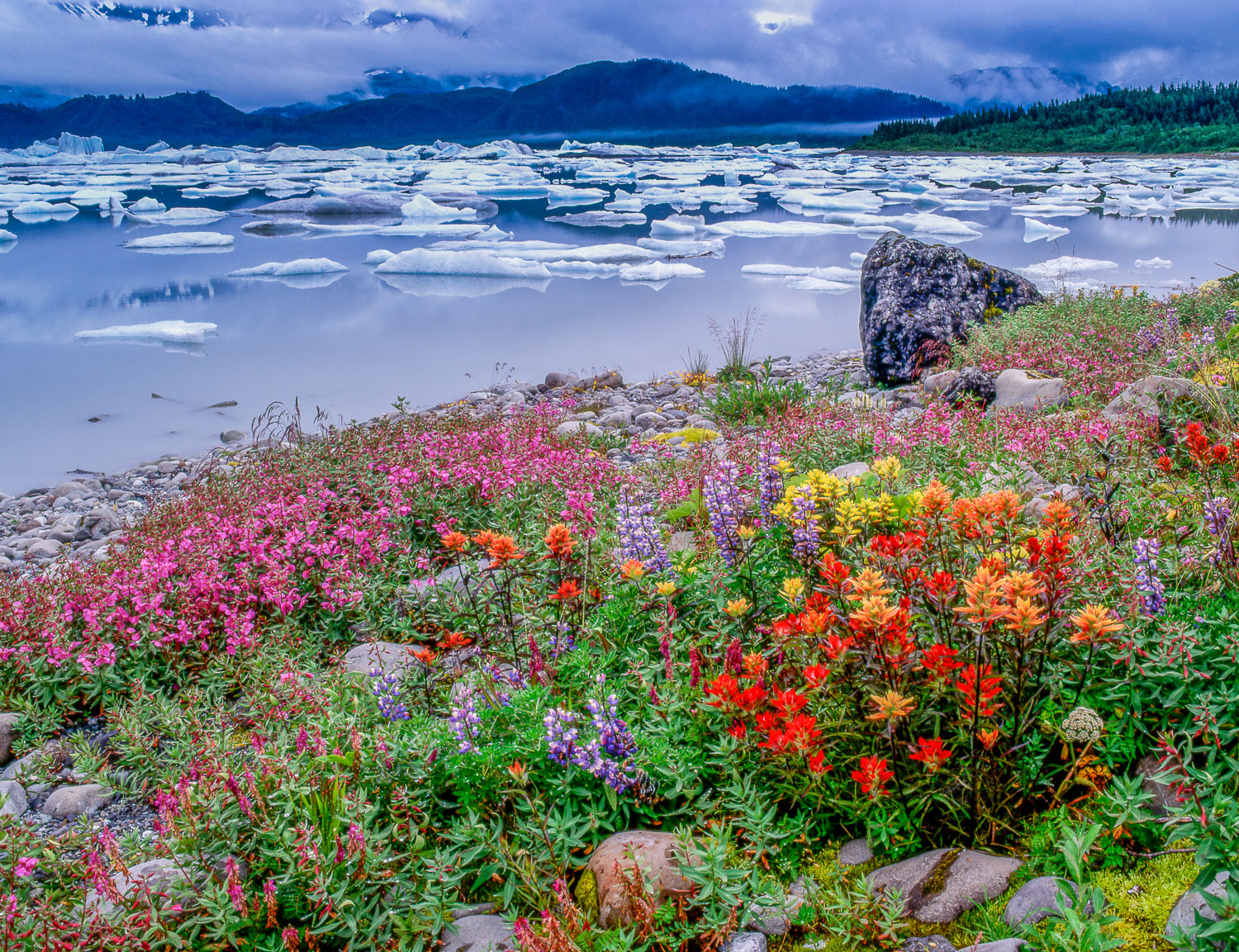 """Icebergs and Wildflowers"" , Russell Fiord Wilderness , Alaska"
