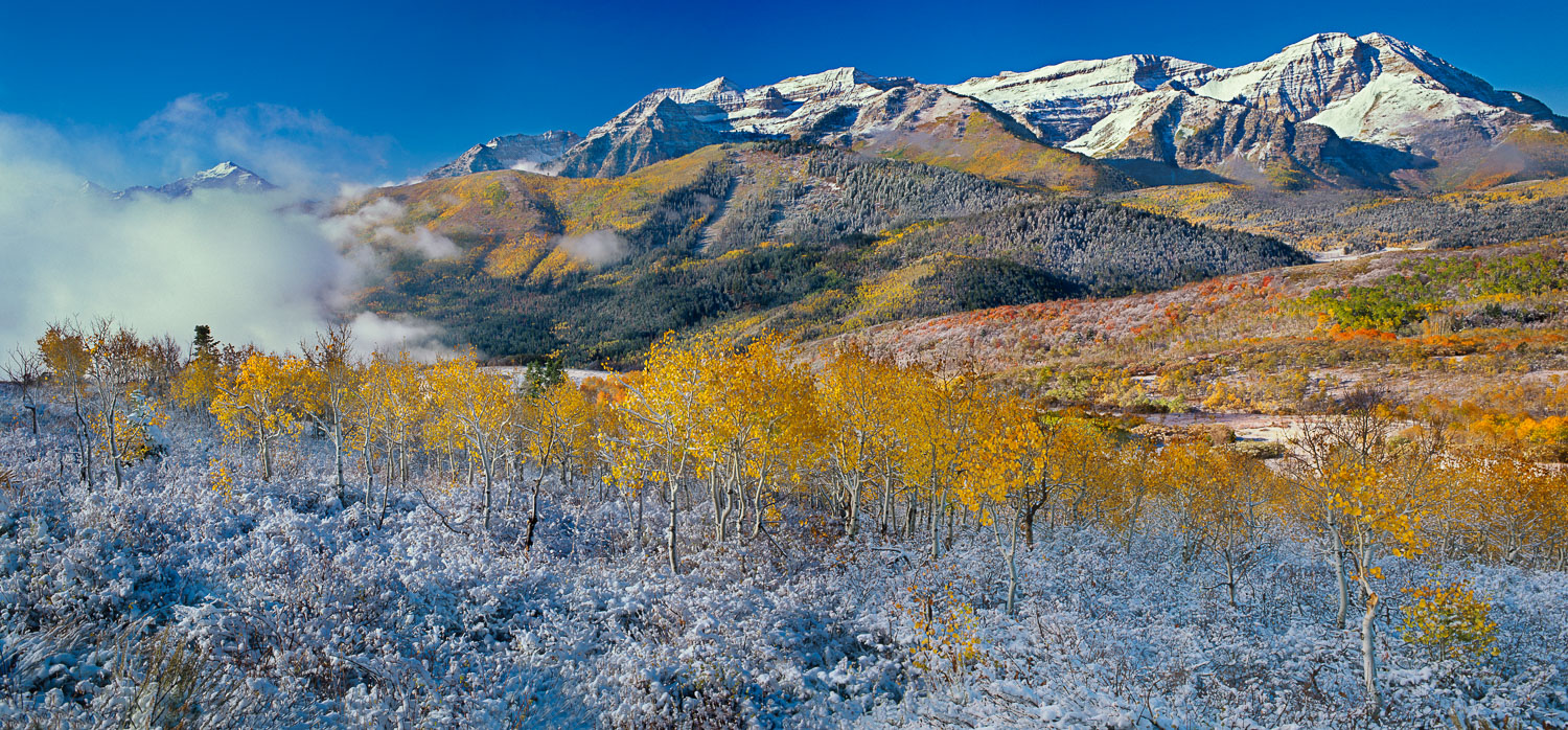 """Timpanogos Transition"" September Snow contrasts with Fall Aspen"