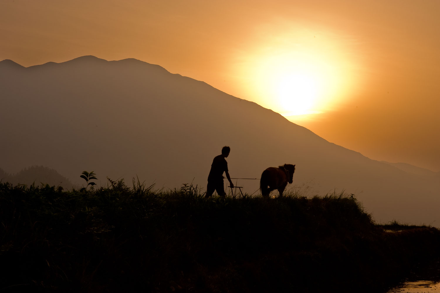 Man with Plow and Horse working in a rice terrace, Dazhai, China