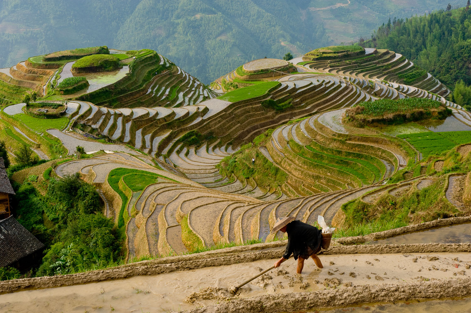Farmer Irrigating Dragon's Backbone Rice Terrace, China