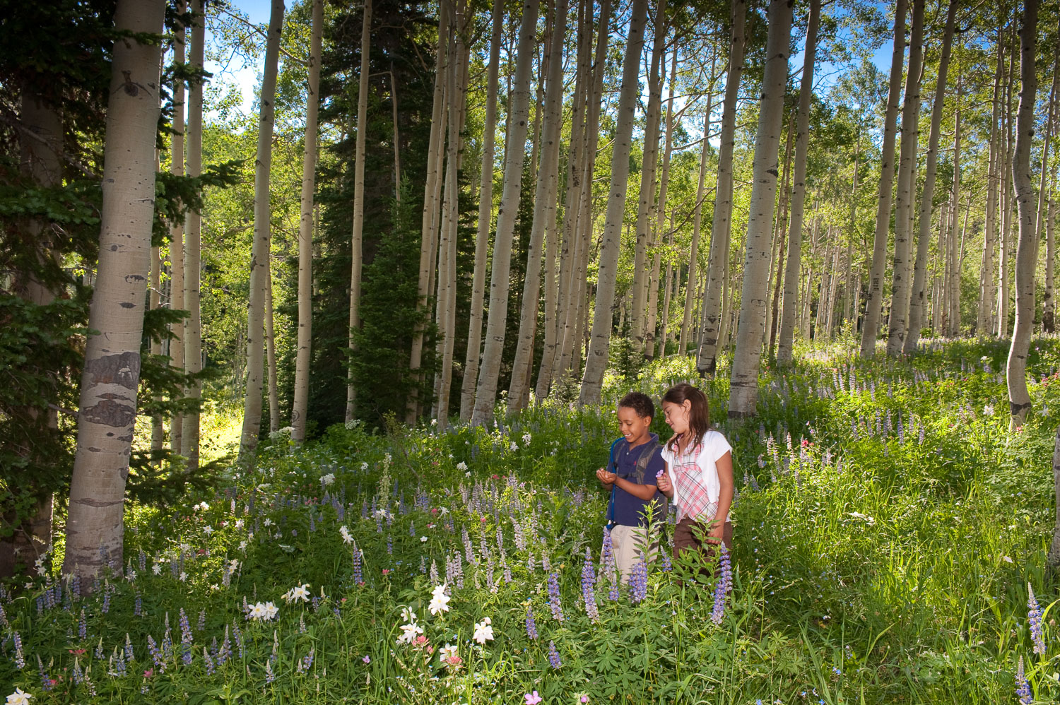 Children Enjoying Nature in grove of Aspens trees and Wildflower