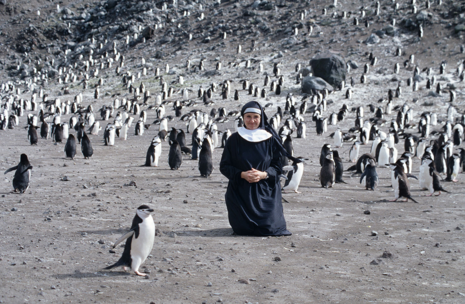 Nun praying for Chinstrap Penguins, Antarctic Peninsula