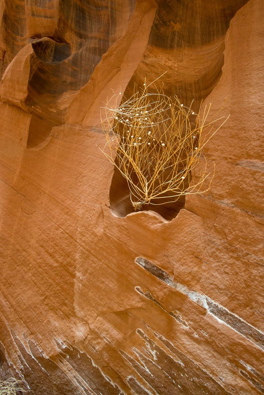 Windswept Branch in Buckskin Slot Canyon, Paria Vermillion Cliff