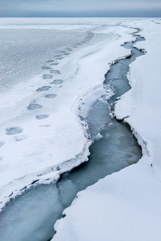 Polar Bear Tracks along an Ice Lead, Barrow, North Slope, Alask
