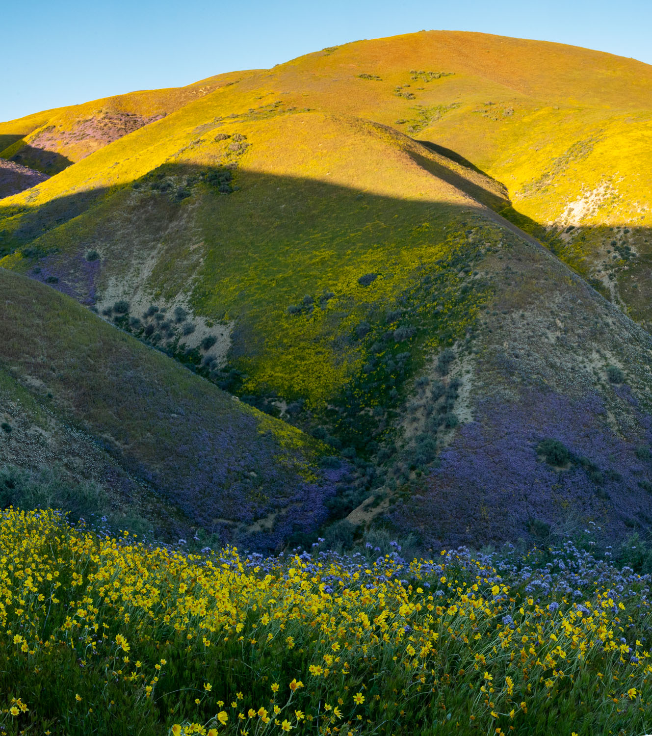 Goldfields and Filaree, Carrizo Plain National Monument, Calif