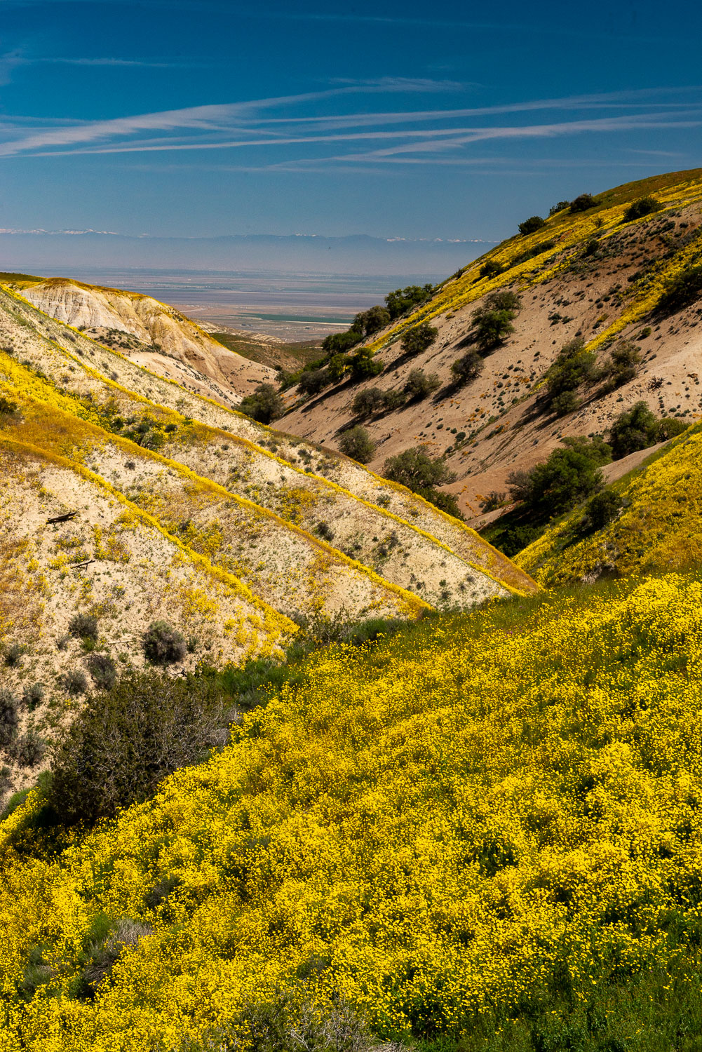 Yellow Goldfields and Blue Sky at Carrizo Plain National Monumen