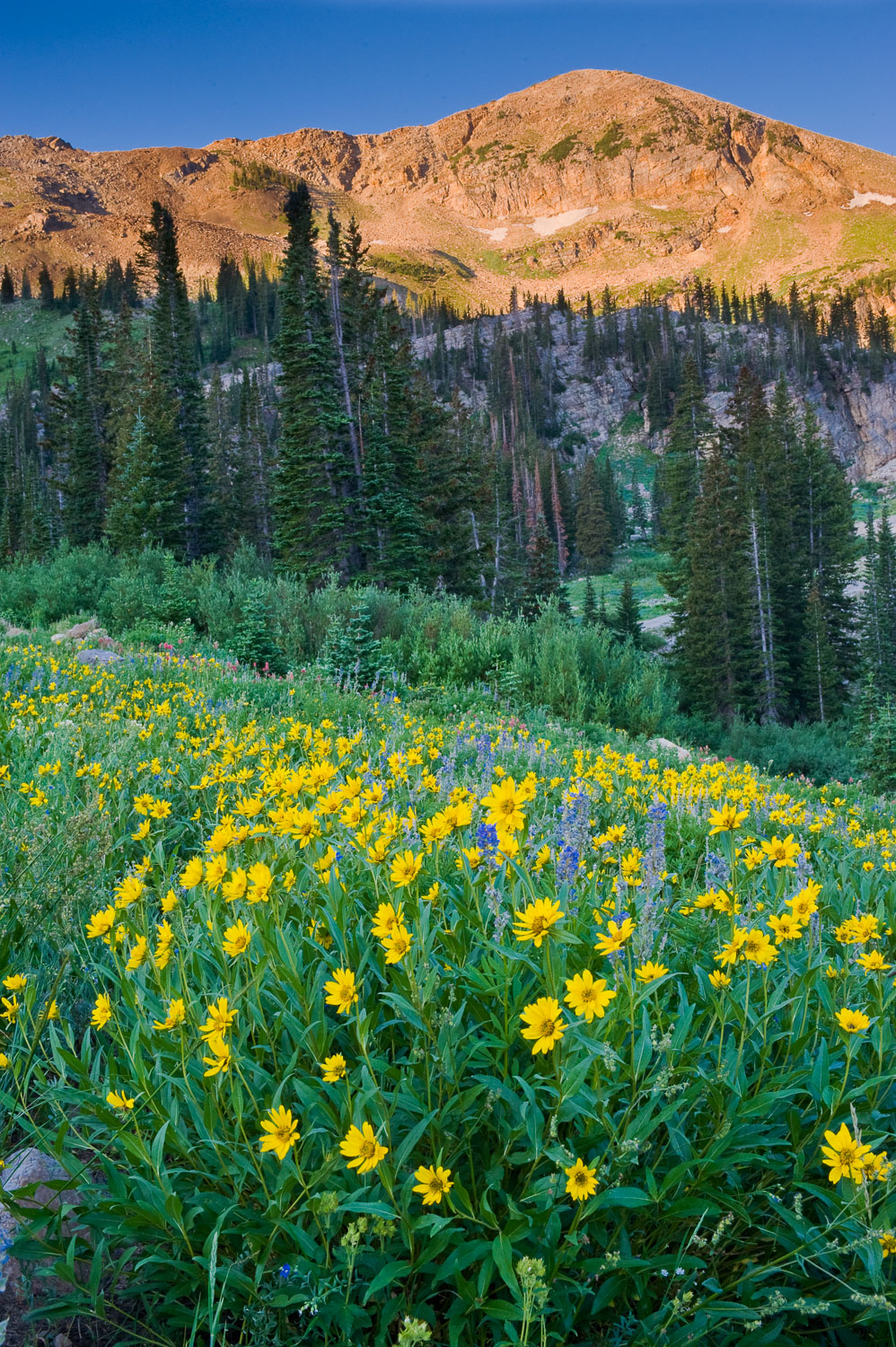 Sugarloaf Mountain and Arrowleaf Balsamroot at Sunrise, Albion B