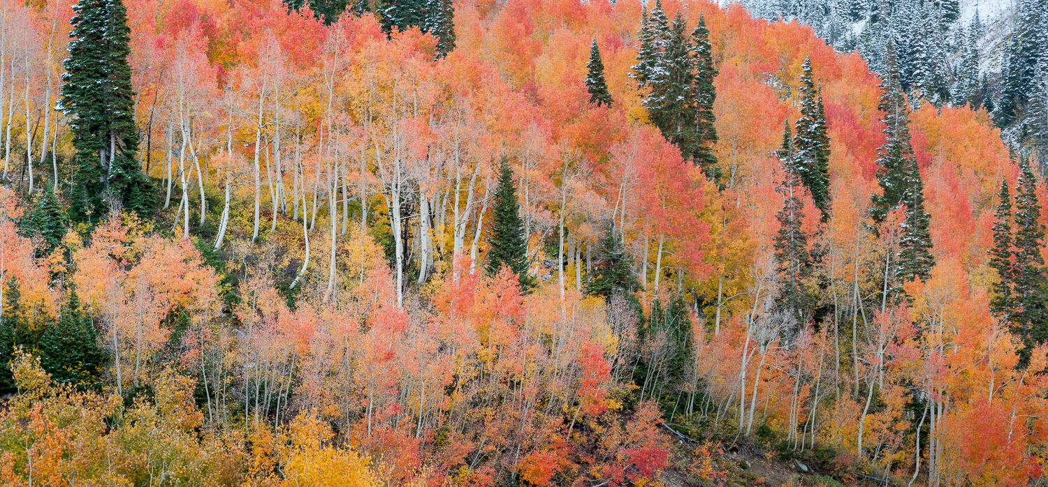 Multicolored Aspen Panoramic Little Cottonwood Canyon, Wasatch M