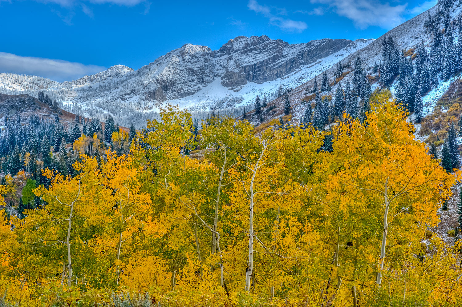 """""""Devil's Castle Autumn"""" : Early Snow and Golden Aspens at Alta,"""