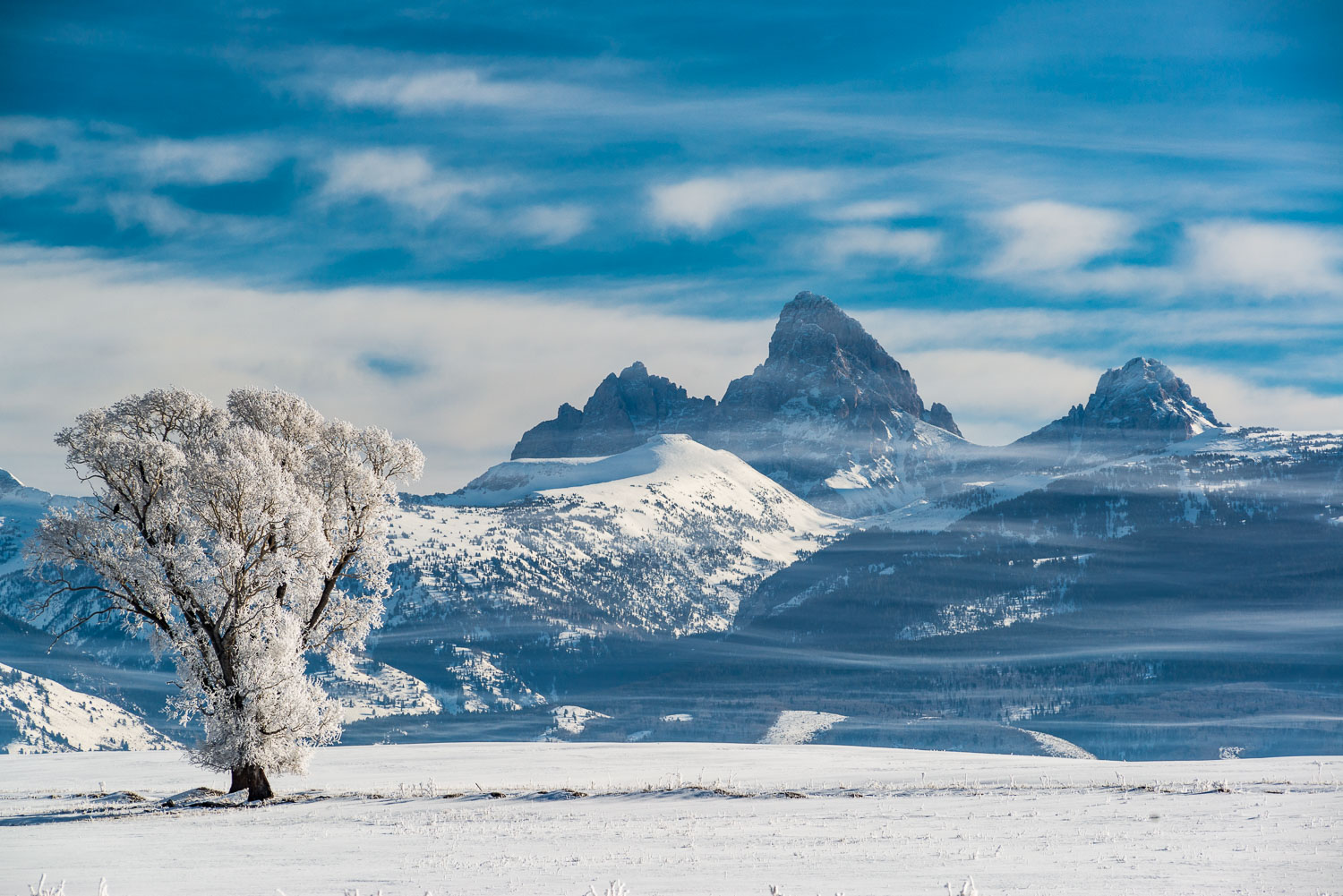Rimed Cottonwood Tree and Layered Clouds in front of Teton Mount