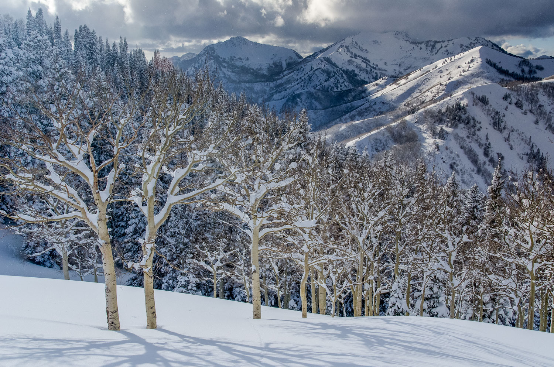 """Snow-Caked Aspens"", Fresh Powder in Big Cottonwood Canyon, Wasa"