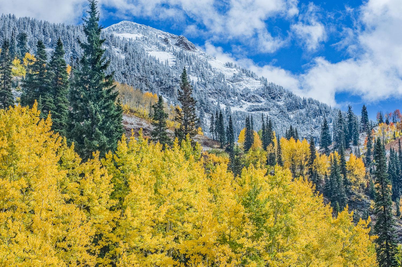 Golden Aspens and First Snow: Snowbird Resort, Little Cottonwood