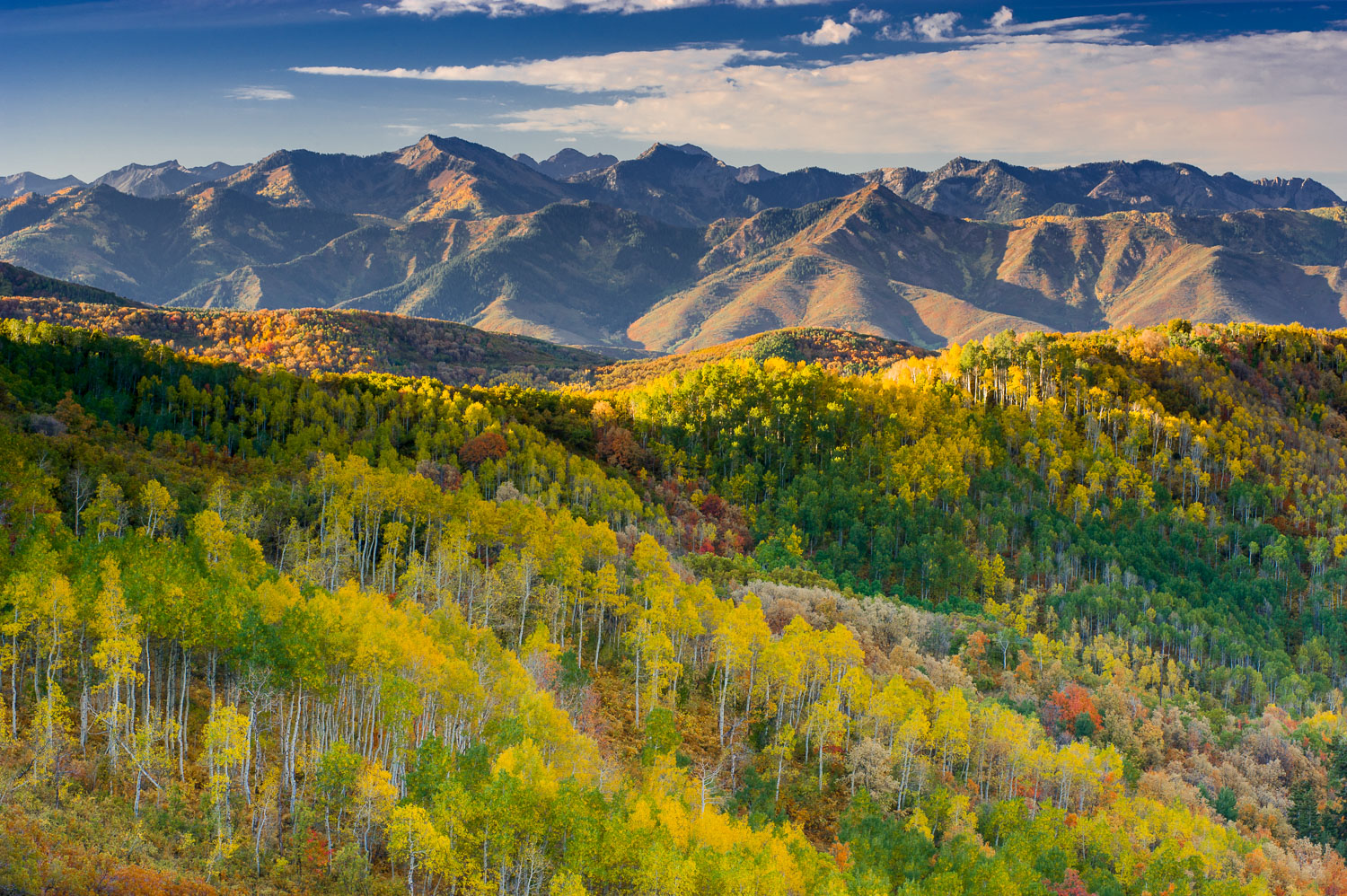 Golden Aspens in East Canyon with Parleys Canyon in distance. Wa