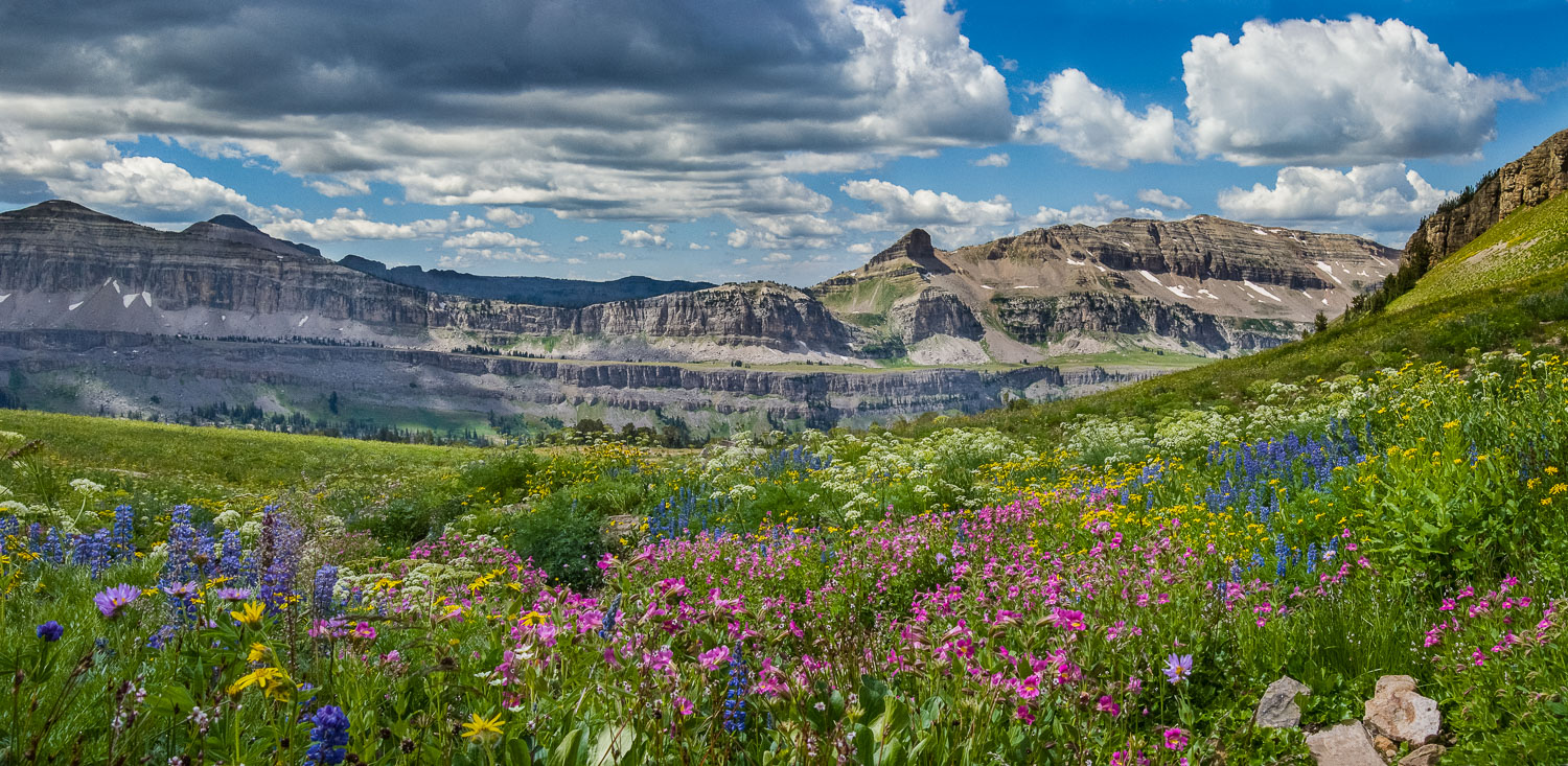 Jedediah Smith Wilderness and Teton Crest Trail in peak wildflower season. It takes a snowy, wet year for the Monkey Flowers to be abundant.