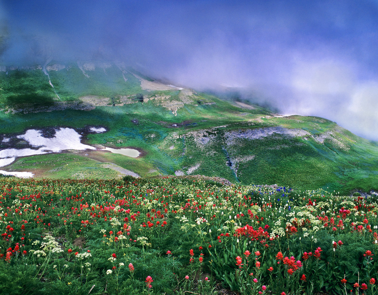 Clearing Fog and Multicolored Wildflower Meadow, Wasatch Mountai