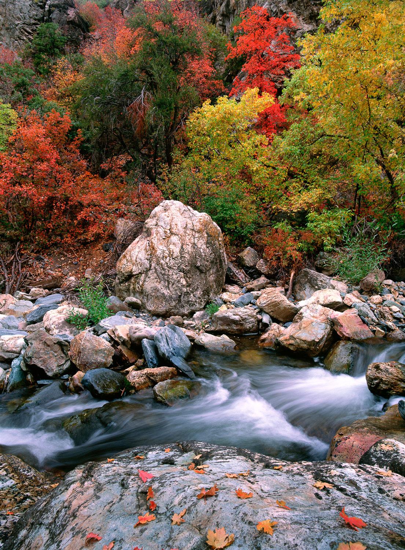 """Maple Current"", and Fall Foliage along Big Cottonwood Creek, ne"