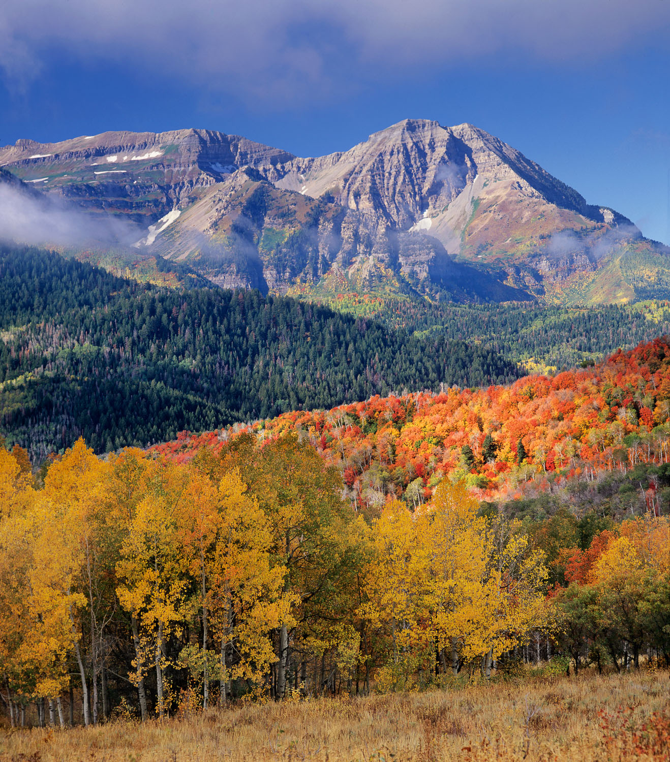 Fall Aspen , Red Maple Trees  Mount Timpanogos, and Blue Sky,Was