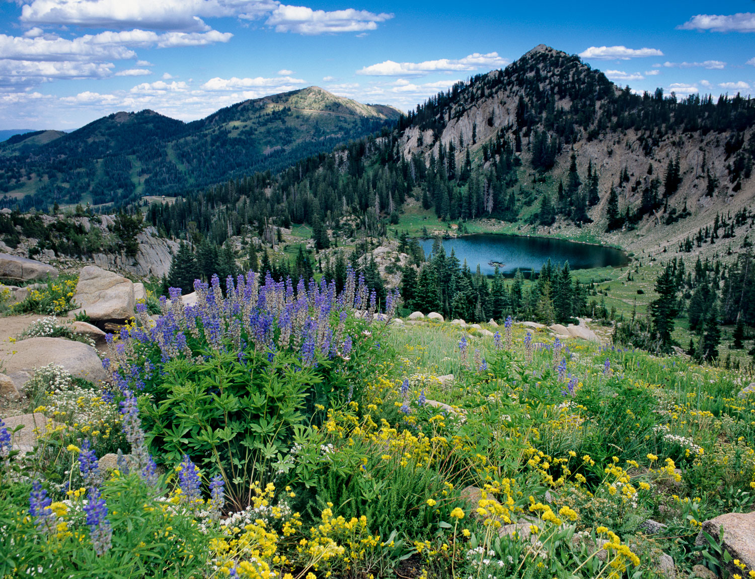 Catherine's Pass, Sunset Peak and wildflowers at their finest: W