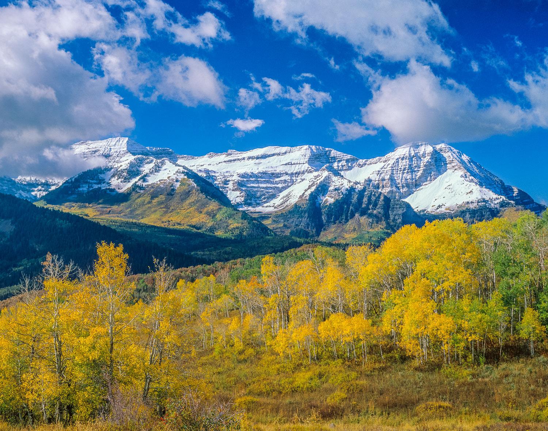 """Timpanogos Gold"" : Aspen Trees , peak  fall color and Mt. Timpa"