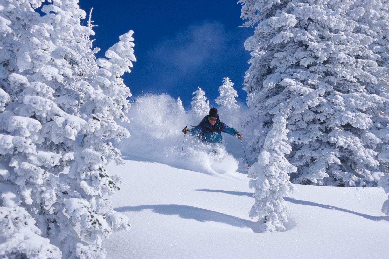 Teton Powder Paradise: Skier enjoys perfect powder amongst flock