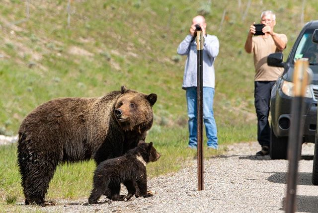 Mother and cub even crossed the highway as 30 folks watched. I pray that this bear does not become habituated to people.