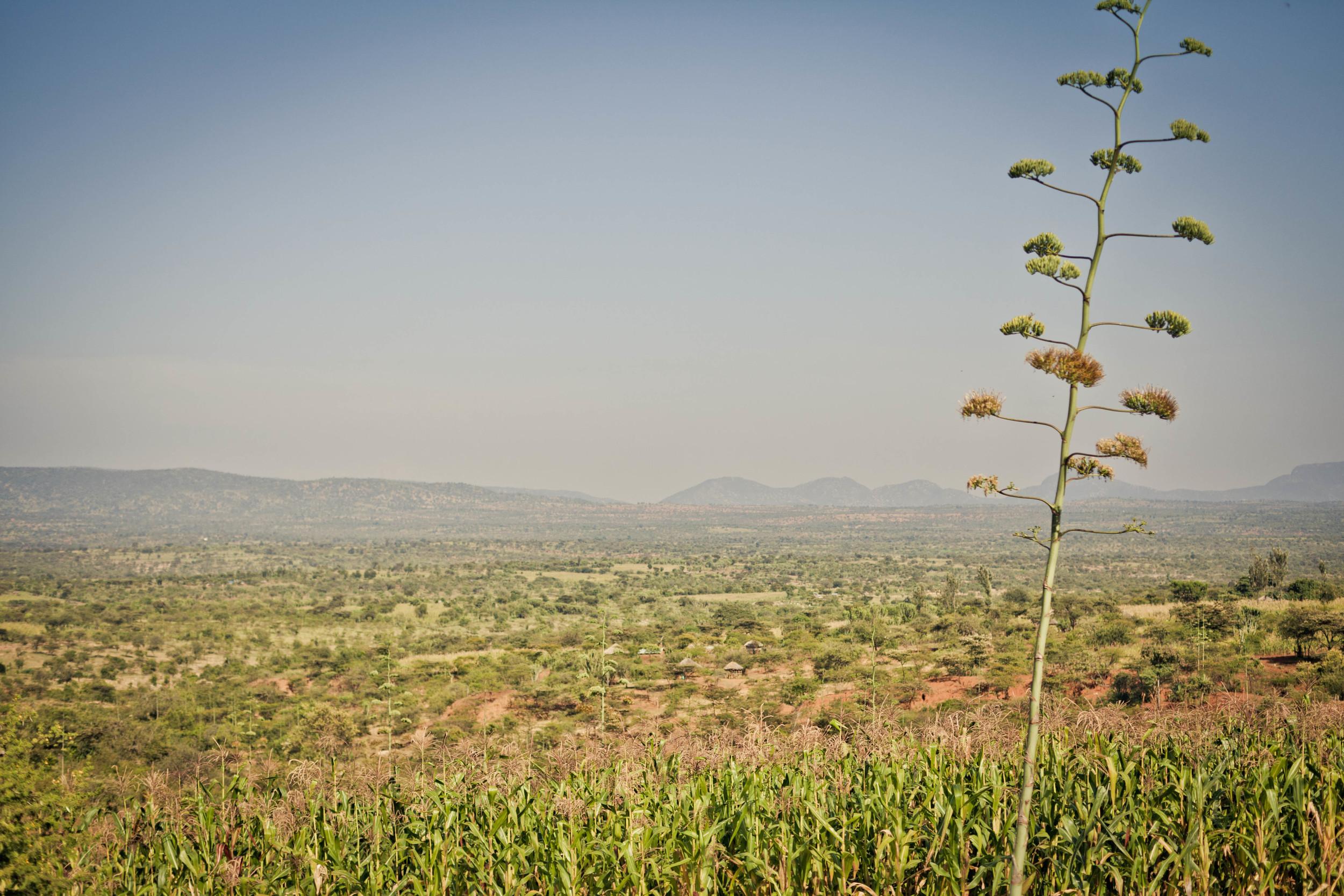 Nov-25-blog-pic_blog-banner-from-Kenya.jpg