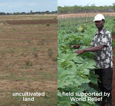 africa food crisis solutions programs