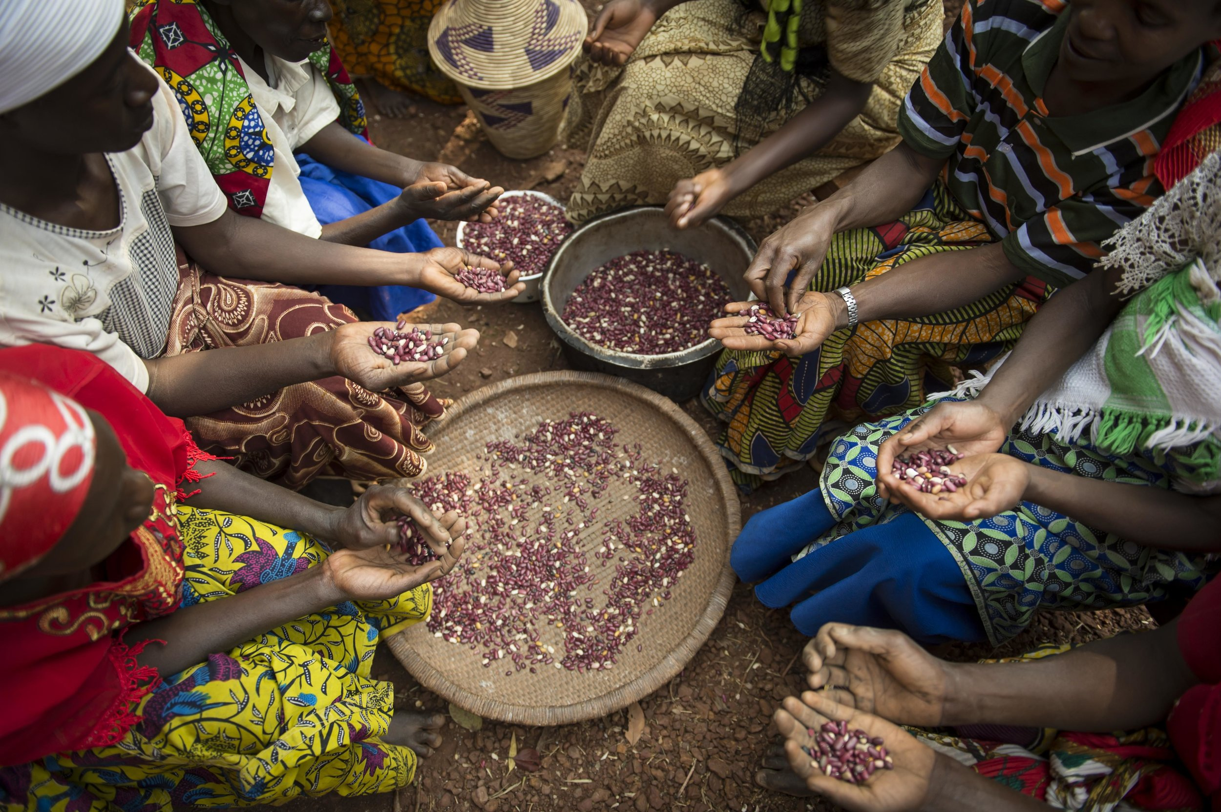 $90  // Give a refugee family in Congo seeds to grow food for their families