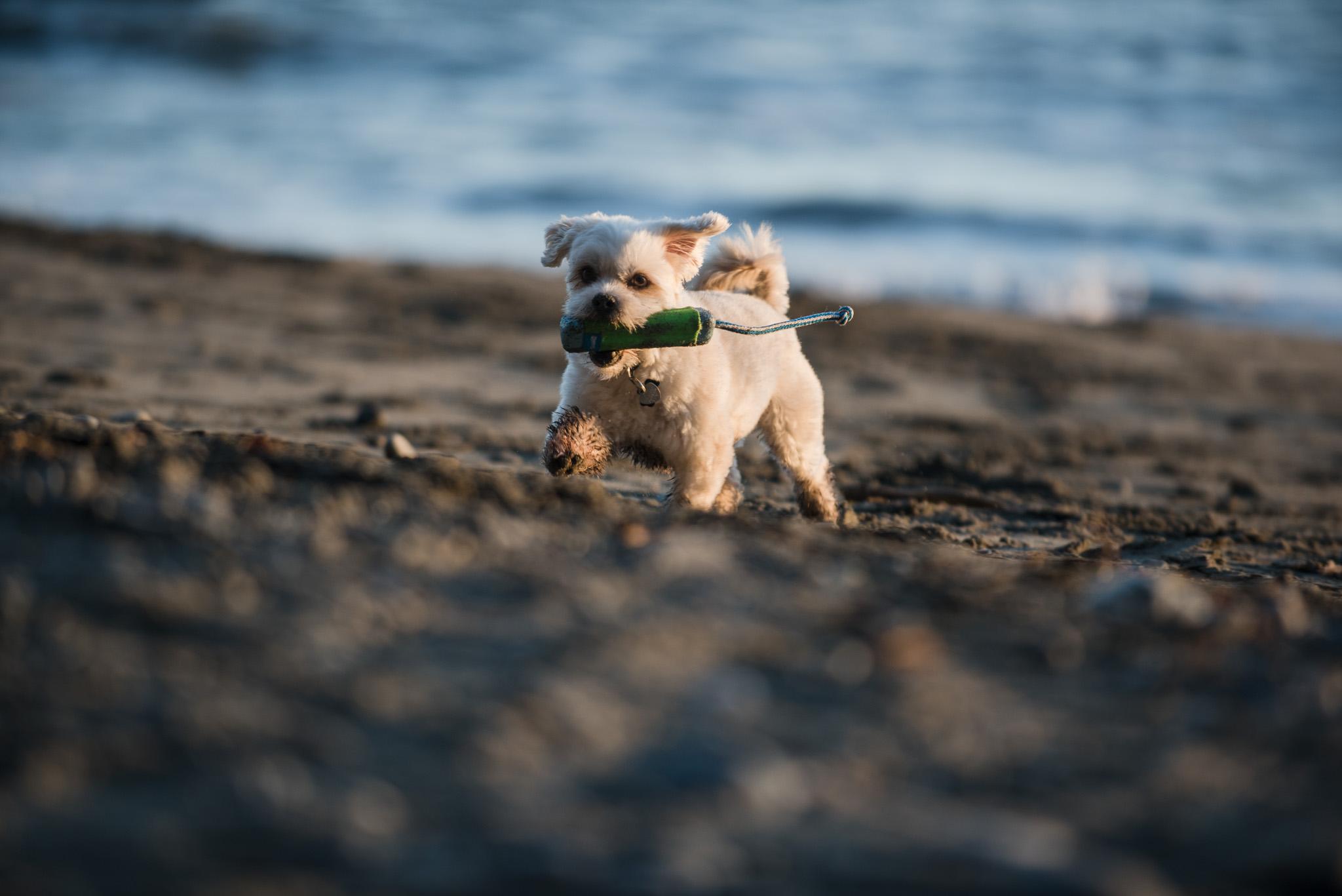 mystic-beach-engagement-victoria-wedding-photographer-21.jpg