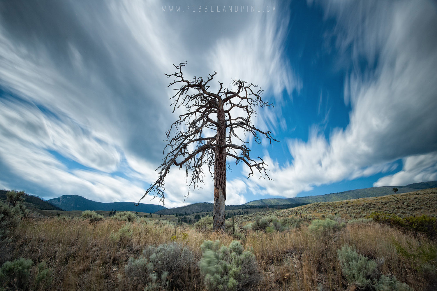 Dead Tree near Cache Creek BC //  Captured by Matt