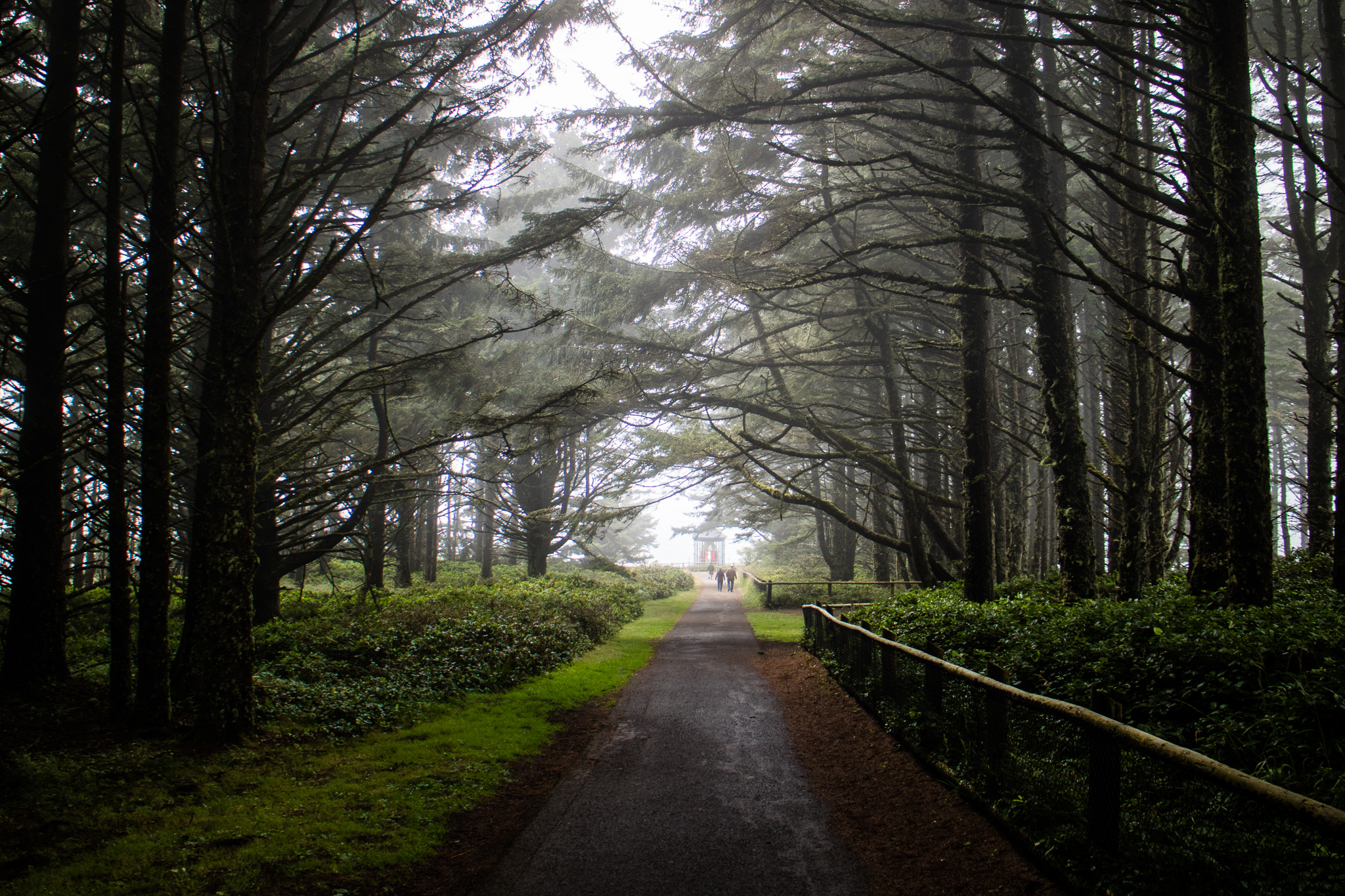 We were back into the heavy fog here, and it was SUPER windy! The pathway down to the lookouts.