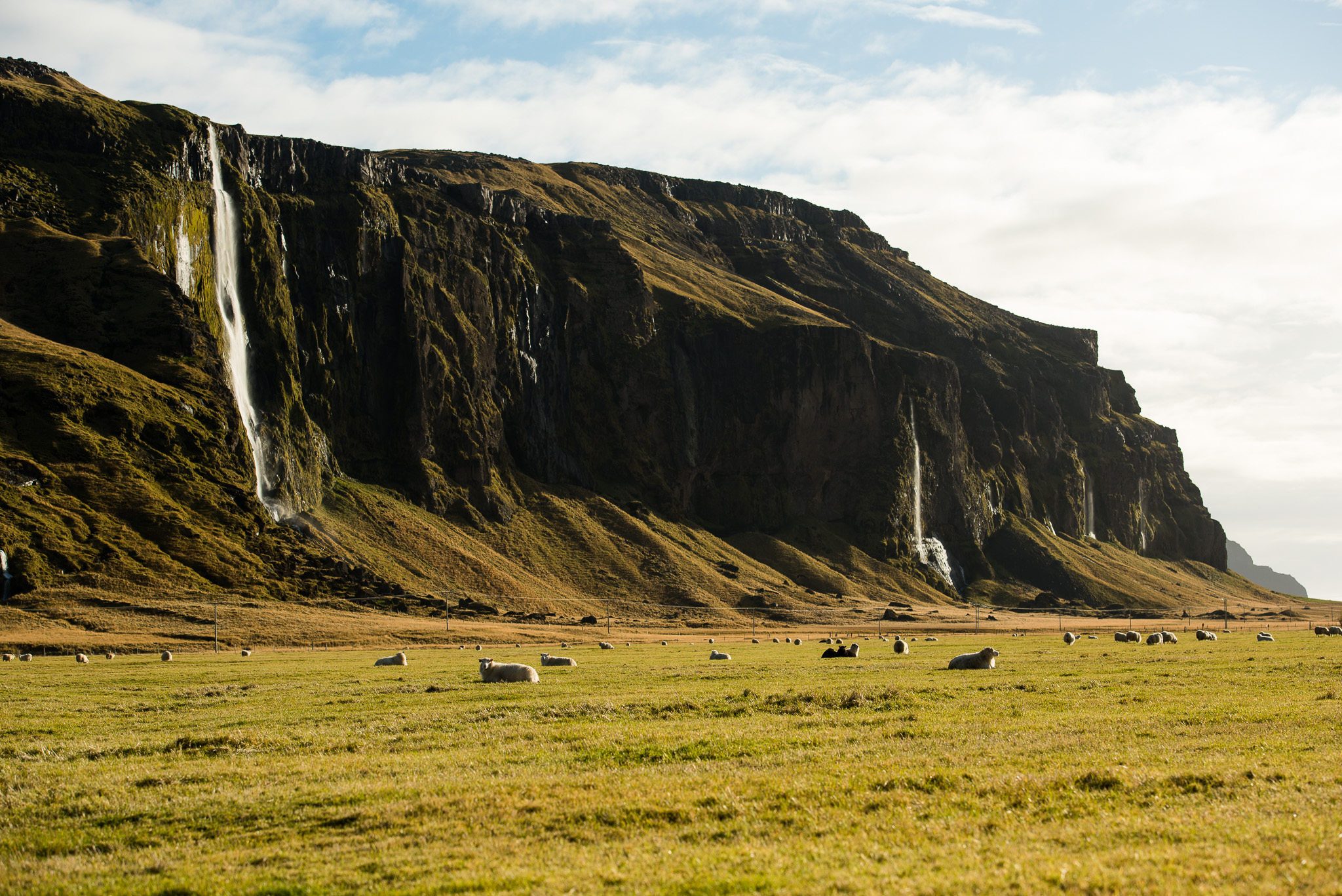 Iceland in a nutshell: sheep and waterfalls.