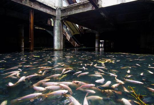 Abandoned shopping mall in Bangkok