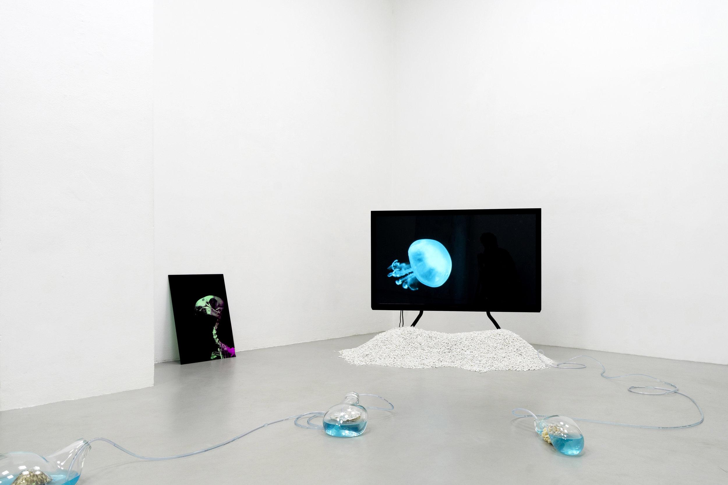 13 Paulo Arraiano, Sensorial Divinities. 2019. Exhibition view. Dimora Artica (ph Cesare Lopopolo).jpg