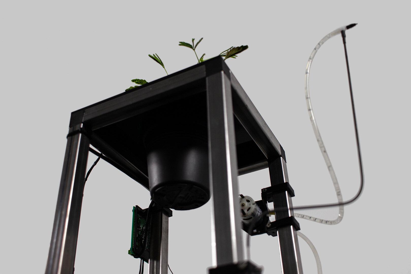 bottom-symbiotic-transmitter.jpg