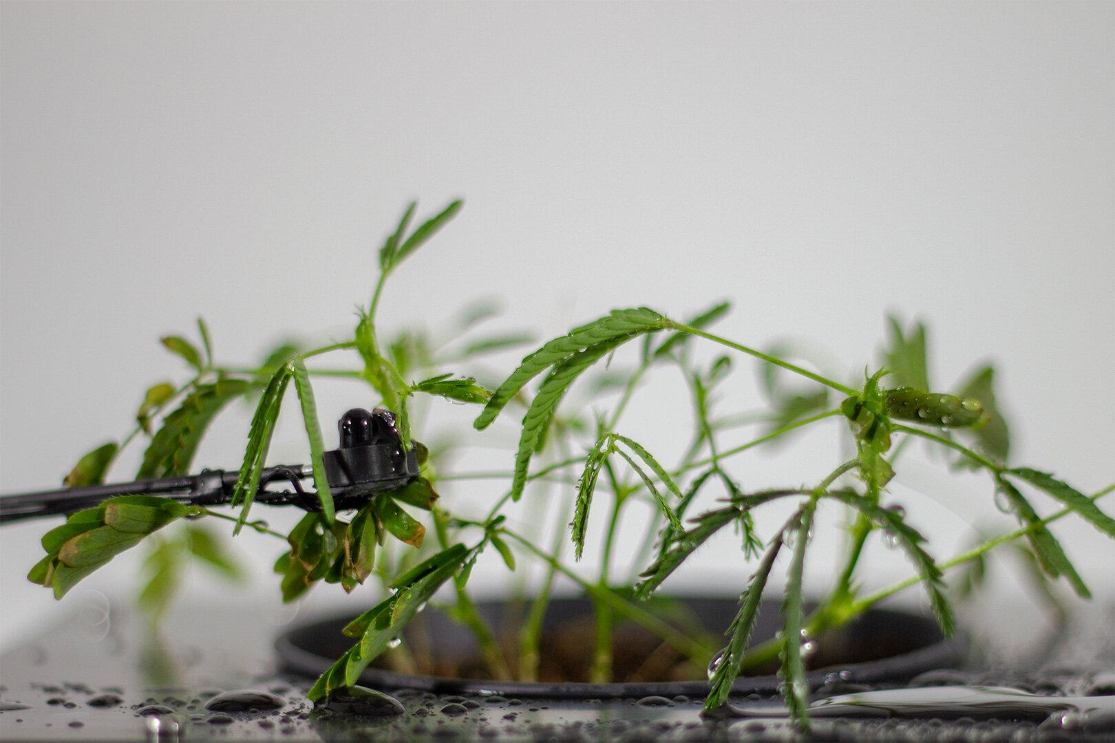 Mimosa-symbiotic-transmitter.jpg