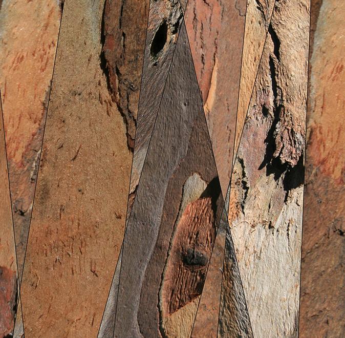 """Trunc , 2005 - Composite Photograph, 36"""" x 10""""."""