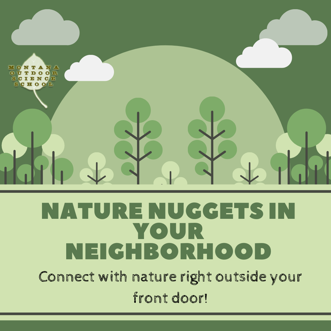nature nuggets in your neighborhood.png
