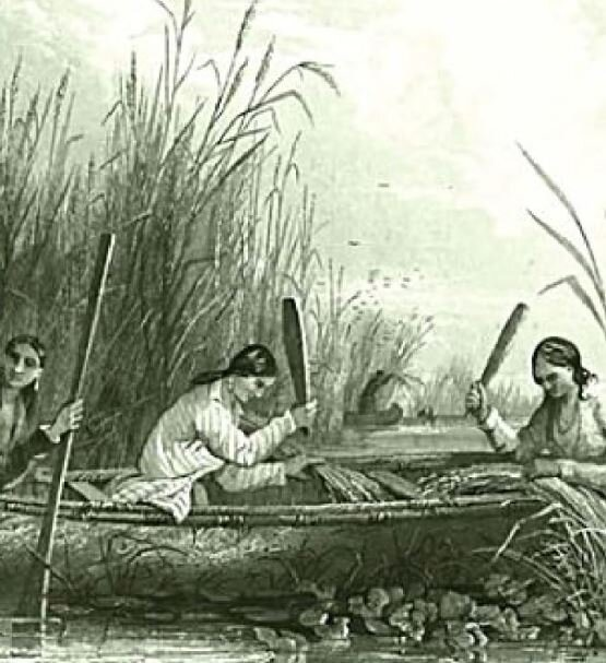 Source:  Manoomin, The Story of Wild Rice in Michigan  by Barb Barton