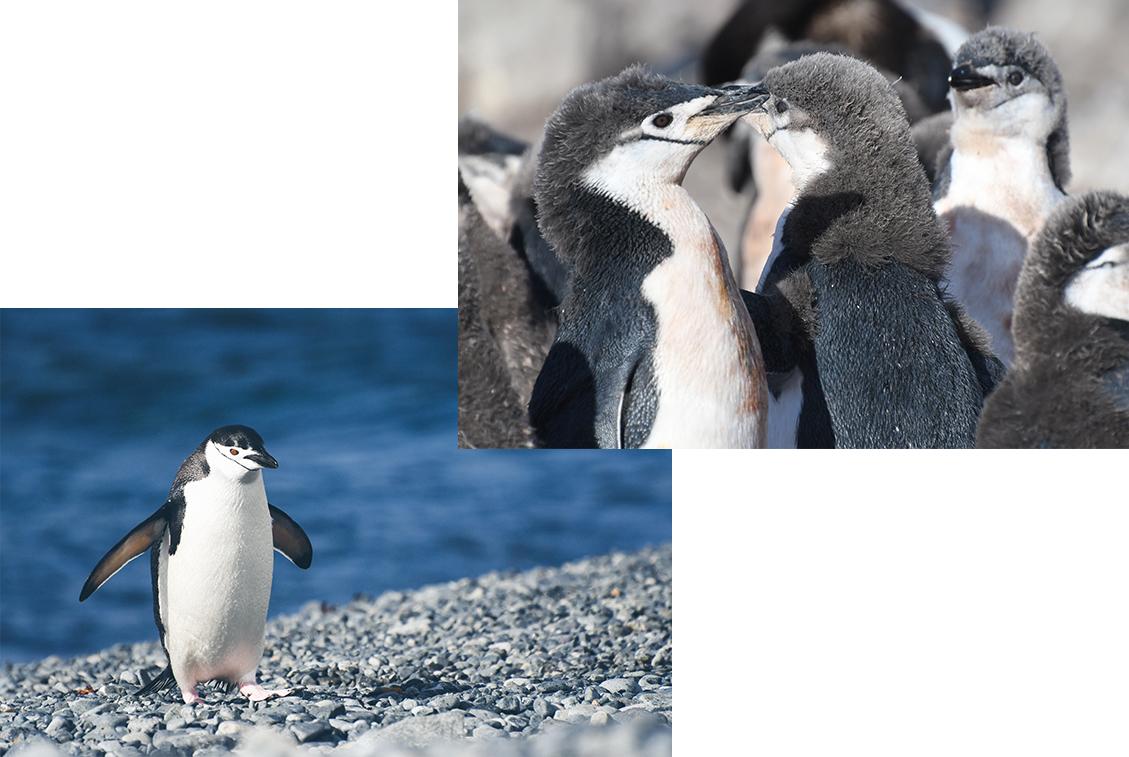 NA_Apr17_Antarctica_IMGComp08.jpg