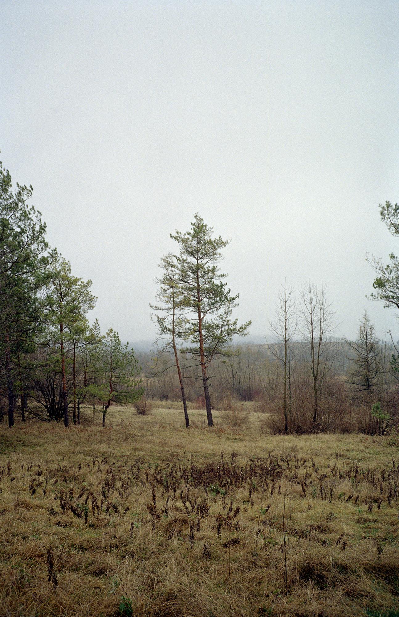 Oleskiy Zamok, Olesko (Trees)