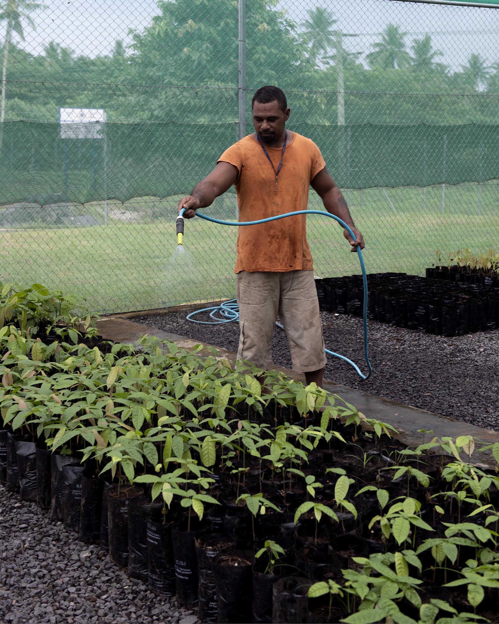 Feuu Sio Afisulu watering seedlings