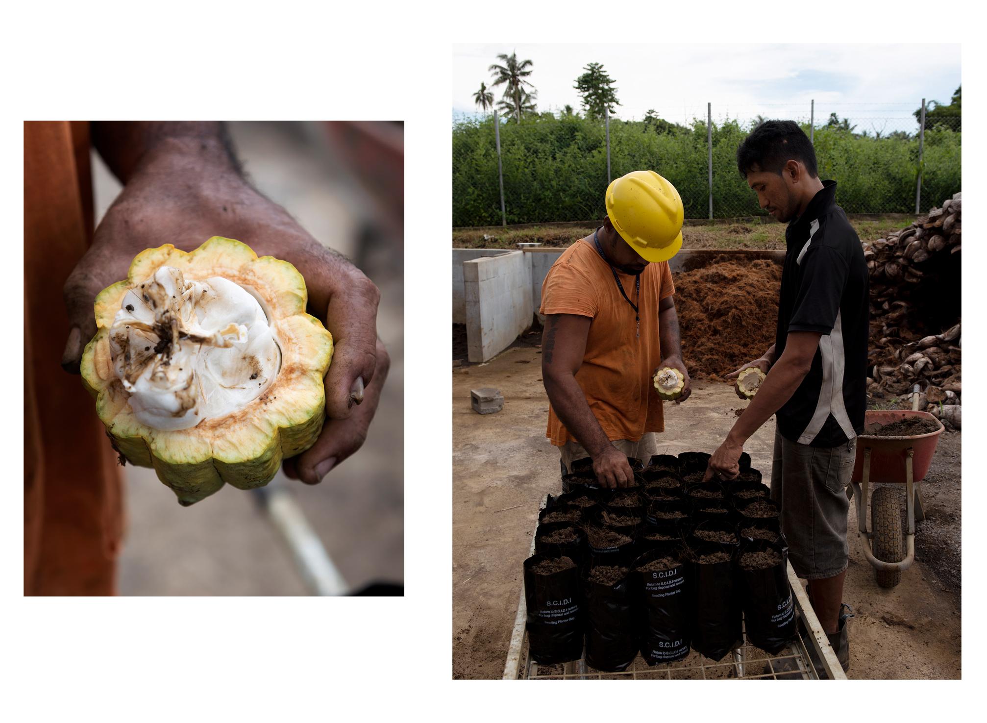 L:  Split koko pod  R:  Feuu Sio Afisulu & Tile To'a planting koko seeds